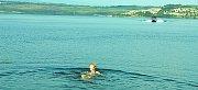 Vodní záchranářka a zdravotní sestra Jaroslava Lejsková se koupe v Jezeru Most.