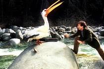 Na motivy hry vznikl film Jumanji s Robinem Williamsem v hlavní roli.