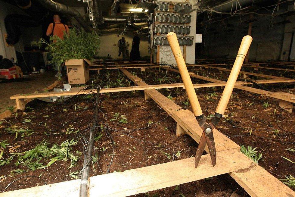 Kriminalisté sklidili úrodu