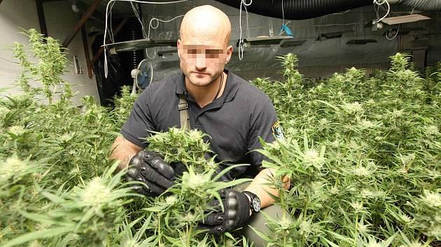 Kriminalisté zabavují rostlinky marihuany v pěstírně