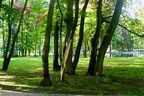 Poničené stromy lze najít i v Zámeckém parku.
