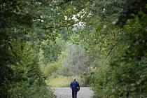 Muž prochází mosteckým lesoparkem Hrabák v době, kdy byl džunglí. Za mužem je tzv. cirkusplac, kde se mohou stavět domy.