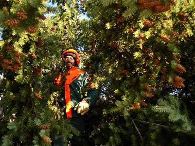 V Mostě se objevil hlavní vánoční strom. Na 1. náměstí ho postavili zaměstnanci technických služeb.