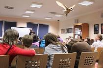 V knihovně se lidé dozvěděli i něco o sovách.