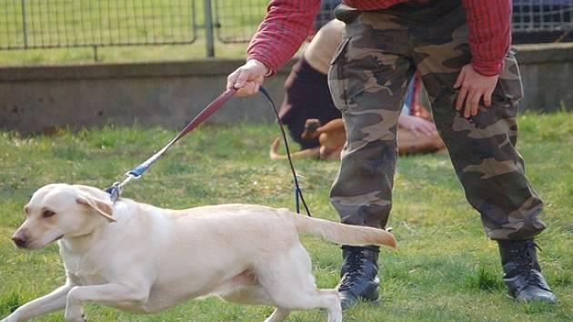 Hlavní psovod Miroslav Kafka při tréninku poslušnosti psa.