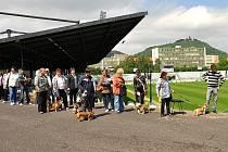 V pondělí 19. května začalo na stadionu v Mostě očkování psů proti vzteklině.