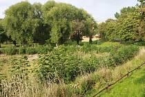 Tak vypadal Pilařský rybník v září 2016