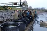 Výlov rybníka u Nemilkova