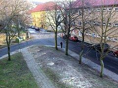 Vykácené stromy v Hornické ulici v Meziboří.