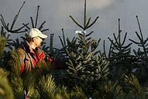 Lesníci darovali dětem vánoční stromky.