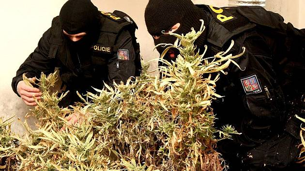 Pěstírna marihuany na sídlišti Liščí Vrch.