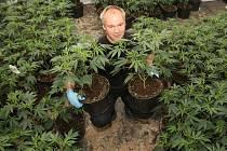 Kapitální úlovek mají za sebou také celníci a policie z Děčínska. V bývalé továrně ve Šluknově policie našla pěstírnu marihuany,kde bylo téměř tisíc tři sta rostlin před sklizní.