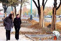 Ženy procházejí třídou Budovatelů v Mostě. Stromy  jsou tam před stavbou chráněné.