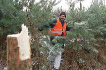 Reportér Deníku objevuje uřezaný stromek v parku uprostřed města.