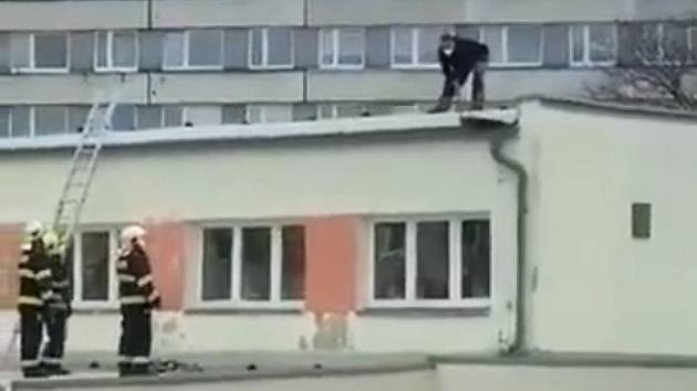 V Litvínově zachraňovali mývala.