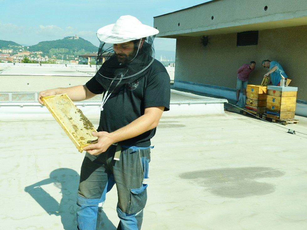 JE TAM. Včelař Vít Loukota odebírá první med od včel na střeše mostecké knihovny. Je to místní unikát.