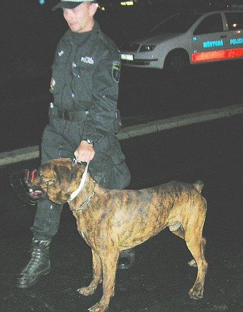 Psovod se služebním psem, který dopadl pachatele.