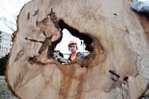 Kácení stromů. Ilustrační foto.