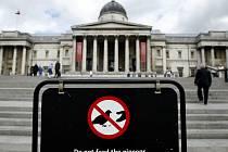 Pohled na tabuli zakazující krmení holubů na Trafalgar Square v Londýně.