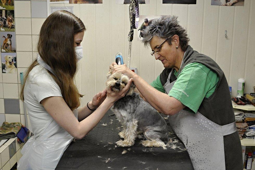 Wanda Kaslová jako první hned ráno ostříhala a upravila sedmiletou fenku Annie.