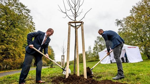 V mosteckém parku Šibeník jsou nové stromy.