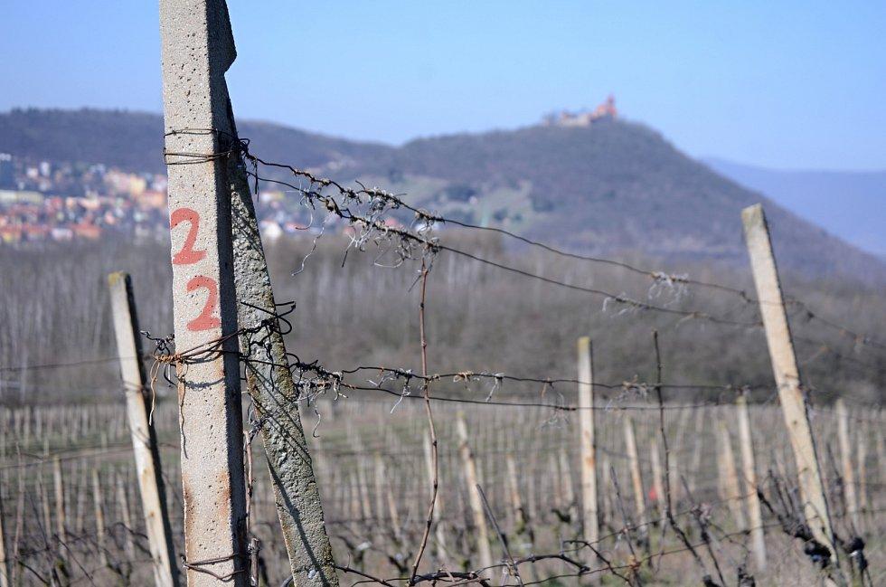 Na vinici pod vrchem Špičák v Mostě začaly jarní práce