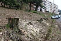 V litvínovské Tylově ulici zůstaly jen pařezy. Stromy zmizely kvůli rekonstrukci horkovodu