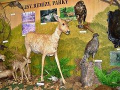 Přírodovědná expozice v Oblastním muzeu v Mostě zastarala a bude se modernizovat.
