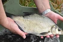 Do řeky Bíliny přibyly další ryby od Unipetrolu.