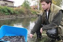 Do Bíliny rybáři vysadili dvacet tisíc mladých rybek.