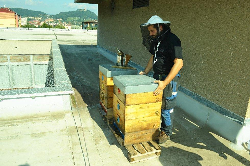 První med od včel na střeše mostecké knihovny.