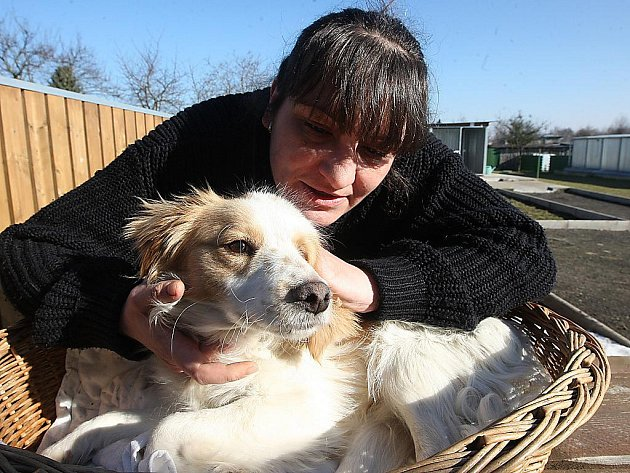 Zraněný pes v litvínovském útulku.