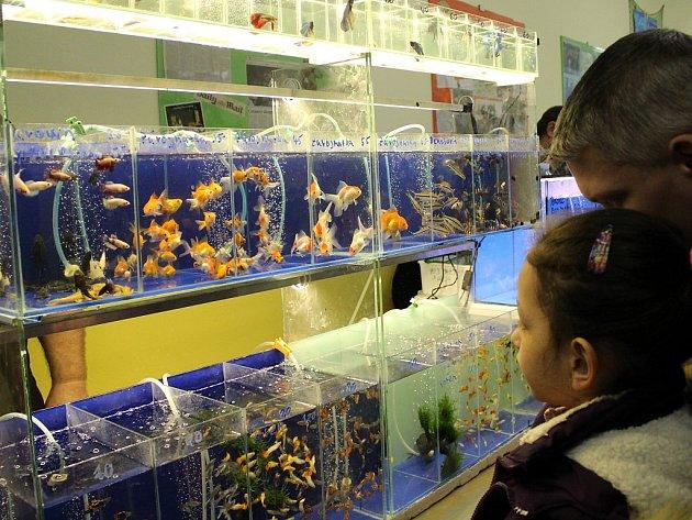 Akvarijní trhy v Mostě.