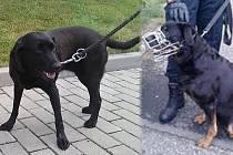 Městská policie Most převezla do útulku další psy