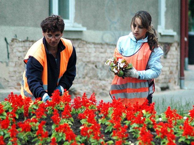 Pracovnice technických služeb v Litvínově vysazují květiny.