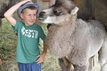 Nové velbloudí mládě AYSHU můžete vidět v Cirkusu Andres, nyní je cirkus v Ústí nad Labem.