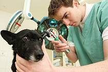 Veterinární asistent Patrik Cmorej při komplexní kontrole jednoho z psů ve veterinární ordinaci v Litvínově.