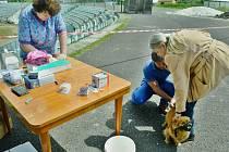 V Mostě začalo v pondělí každoroční hromadné očkování psů proti vzteklině.