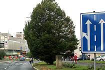 Košatý strom znesnadňuje řidičům i chodcům výhled.