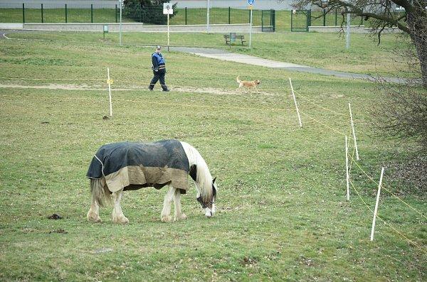 Cirkus Berosini vparku Šibeník vMostě.