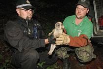 Záchrana selátek z metr a půl hluboké šachty v litvínovském lese