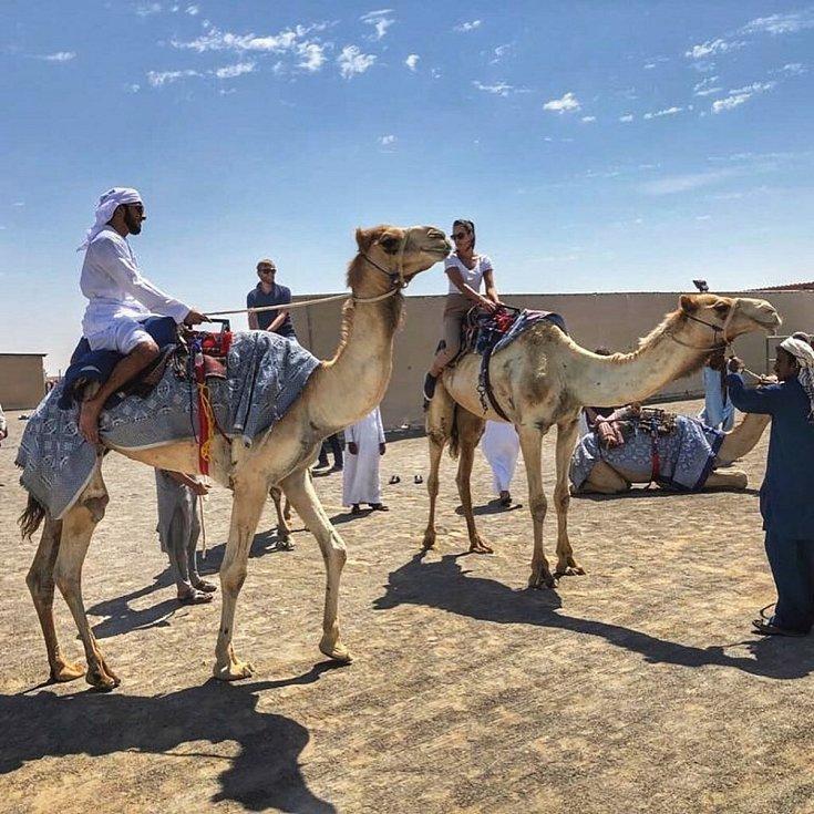 Velbloudi jsou ve Spojených arabských emirátech všudepřítomní.