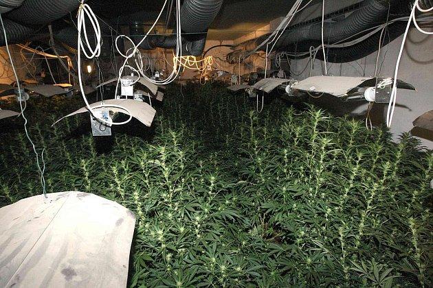 Pěstírna marihuany v Braňanech na Mostecku