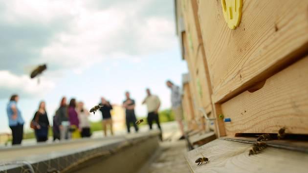 Chov včel na střeše mostecké městské knihovny