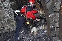 Psí záchranáři se poprvé cvičili v šachtě.