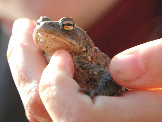 Jaro vyhnalo žáby