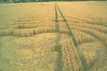 KRUHY V OBILÍ. Již značně poškozený piktogram v pšenici se povedlo vyfotografovat jen z vnějšku, uvnitř se fotografie z nepochopitelných důvodů z karty fotoaparátu vždy vymazaly.