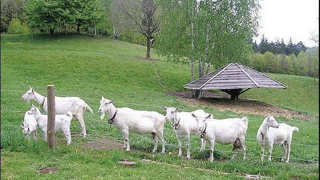 Kozí farma v Chuchelně chystá den otevřených vrat