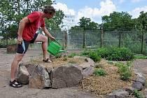 V sobotu 12. června se k Víkend otevřených zahrad připojí také komunitní Sokolí zahrada v Teplicích.