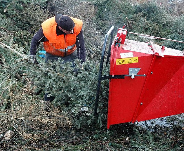 Vánoční stromek končí v drtiči. Hmota, která vznikne, je součástí kompostu a ten se využívá k rekultivaci. Na malém snímku kupa bioodpadu z teplických zahrádek, domácností a obchodů.